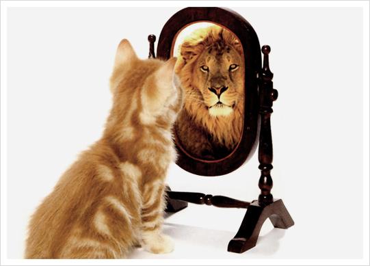 거울에 비친 사자를 바라보는 고양이 사진