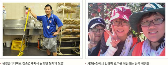 왼쪽 이미지 워킹홀리데이로 청소업체에서 일했던 필자의 모습 오른쪽 이미지 사과농장에서 일하며 호주를 체험하는 한국 학생들