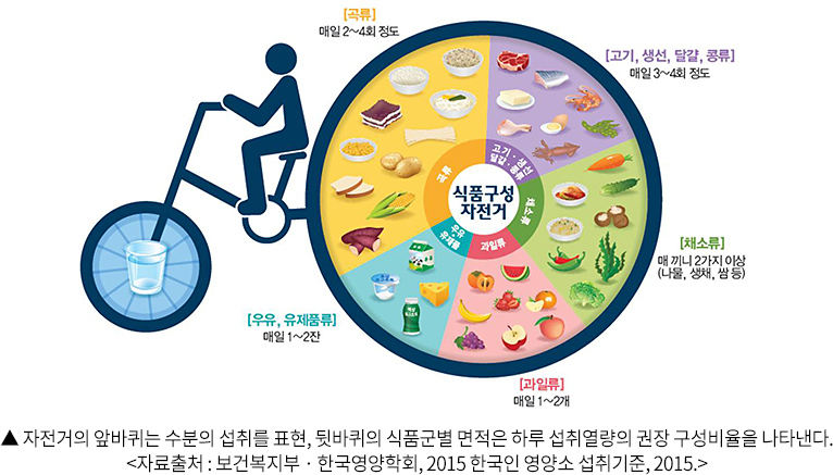 자전거의 앞바퀴는 수분의 섭취를 표현, 뒷바퀴의 식품군별 면적은 하루 섭취열량의 권장 구성비율을 나타낸다. 자료출처 : 보건복지부 · 한국영양학회, 2015 한국인 영양소 섭취기준, 2015.