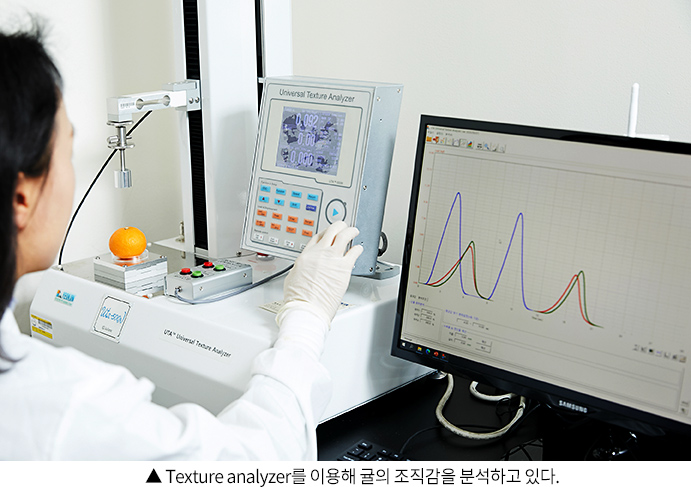 Texture analyzer를 이용해 귤의 조직감을 분석하고 있다.